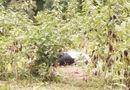 Tin trong nước - Bé gái hoảng sợ vì phát hiện thi thể nam giới cạnh mương nước khi đi chăn trâu