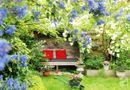 Cộng đồng mạng - Khu vườn hoa nở suốt bốn mùa đẹp như trong mơ