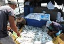 Tin trong nước - Xác định nguyên nhân khiến cá chết hàng loạt trên sông Chà Và