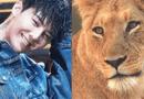 """Tin tức giải trí - Fan """"chơi trội"""" tặng G-Dragon một chú sư tử nhân dịp sinh nhật"""