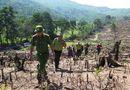 Tin trong nước - Thủ tướng Chính phủ yêu cầu làm rõ vụ phá rừng tại Bình Định