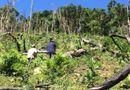 Tin tức - Vụ phá rừng ở Quảng Nam: Bắt giam một đối tượng, tiếp tục điều tra kẻ chủ mưu