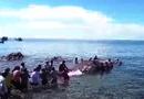 Tin trong nước - Phát hiện xác cá Ông dài hơn 13 m ngoài biển Nam Du