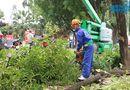 Tin trong nước - Bắt đầu di chuyển hàng cây xanh trên đường Phạm Văn Đồng