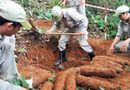 Tin trong nước - Phát hiện hầm chứa 27 quả đạn pháo 105 mm trong vườn nhà dân