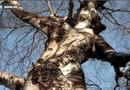 """Tin tức - Những thân cây trên thế giới """"dị"""" hơn cây gỗ giá 1 triệu USD ở Thanh Hóa"""