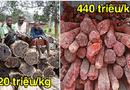 """Đời sống - Những cây gỗ tươi quý hiếm bậc nhất thế giới, có giá """"trên trời"""" mà đại gia săn lùng"""