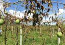 Pháp luật - Khởi tố hai đối tượng chặt hạ hơn 1.200 gốc cây chanh leo