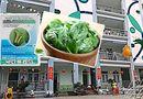 Giáo dục pháp luật - Rau tồn dư thuốc bảo vệ thực vật tại trường Hoàng Liệt: Kết quả chi tiết sẽ thế nào?
