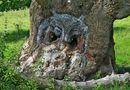 Đời sống - Giật mình với những cây cổ thụ có hình thù kỳ quái