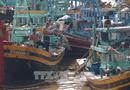Tin tức - Ứng phó với bão số 12: Rà soát, xây dựng phương án sơ tán dân ra khỏi vùng nguy hiểm