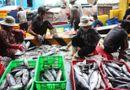 Kinh doanh - Cá ngừ đại dương mất mùa ngư dân thu lỗ trầm trọng
