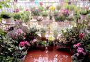 Kinh doanh - Mãn nhãn với vườn hoa, rau củ quả trồng trên sân thượng