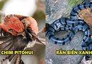 Video-Hot - 5 sinh vật nhìn rất dễ thương nhưng chạm nhẹ có thể mất mạng