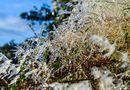 Tin trong nước - Cao Bằng: Băng tuyết phủ trắng đỉnh Phia Oắc