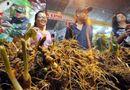 Tin tức - Choáng ngợp chợ sâm đắt đỏ nhất Việt Nam