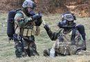 Tin thế giới - Lầu Năm Góc lên tiếng về tin đồn di tản thân nhân lính Mỹ khỏi bán đảo Triều Tiên