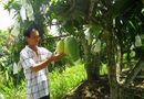 Tin tức - Mỹ, Nhật, Hàn, Trung Quốc đồng loạt đặt mua rau củ quả Việt