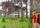 Tin tức - Bắt tạm giam một Trưởng ban Ban Quản lý rừng phòng hộ