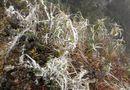 Tin tức - Dự báo thời tiết ngày 12/1: Miền Bắc tiếp tục rét đậm, rét hại