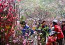 Tin tức - Dự báo thời tiết dịp Tết Nguyên đán 2018 mới nhất