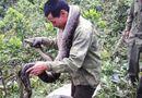 """Tin trong nước - Hà Tĩnh: Dân bắt được trăn """"khủng"""" dài 2m, nặng 20kg?"""