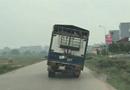 Tin tức - Thót tim cảnh xe tải chở lợn nghiêng 45 độ chạy trên đường