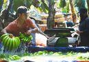 Tin tức - Thương lái Trung Quốc lùng mua chuối: Bộ Công Thương cảnh báo