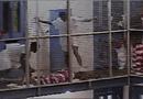 Tin thế giới - Nhà tù tư nhân ở Mỹ: Đánh đập, tự sát và những lính gác bị trả lương thấp