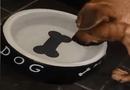 Tin tức - Chú chó đáng thương gặp chủ