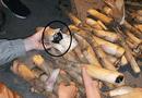 Tin tức - Thu giữ gần 5000 viên ma túy giấu trong cây măng