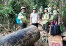 Tin tức - Quảng Nam: Xử lý kỷ luật, cách chức hàng loạt cán bộ kiểm lâm để mất rừng
