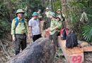 Tin tức - Quảng Nam: Hàng loạt cán bộ kiểm lâm xin nghỉ việc vì áp lực