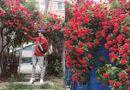 Tin tức - Dân mạng tiếc hùi hụi khi hay tin ngôi nhà có cổng hoa hồng đẹp nao lòng sắp bị bán