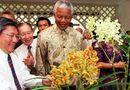 """Tin thế giới - Nghệ thuật """"ngoại giao phong lan"""" của Singapore: Loài hoa nào sẽ mang tên 2 nhà lãnh đạo Mỹ-Triều?"""