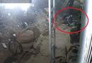 Tin tức - Clip: 2 thanh niên thản nhiên trộm chó bằng tay không ngay trước cửa nhà dân