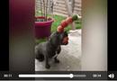 Tin tức - Video: Chú chó biểu diễn ảo thuật khiến người xem không nhịn nổi cười