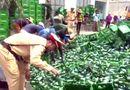 Tin tức - Nghệ An: Xe chở 10 tấn bia bị lật, CSGT phụ giúp tài xế gom hàng