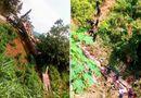 """Tin trong nước - Vụ xe khách lao xuống vực ở Cao Bằng: Hộp đen """"biến mất"""" bí ẩn"""