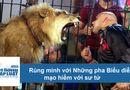 """Tin thế giới - Video rợn người những pha biểu diễn """"sinh tử"""" với sư tử"""