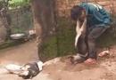 """Tin tức - """"Cẩu tặc"""" bị dân trói vào gốc cây, treo chó vào cổ"""