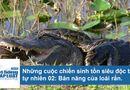 """Tin tức - Bản năng sinh tồn đặc biệt của rắn - """"sát thủ máu lạnh"""" rừng già"""