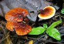 Tin tức - Những loại nấm, rong biển hỗ trợ điều trị ung thư hiệu quả