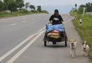 Tin tức - Cảm động người đàn ông đi bộ hơn 1.500 km để thực hiện lời hứa với bạn gái