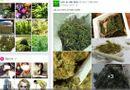 """Tin tức - Tiếp cận """"sàn giao dịch cần sa xuyên quốc tế"""" chuyên cung ứng hạt, cây giống ma túy"""