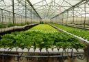"""Đời sống -  """"Công nghệ 4.0"""" cơ hội và thách thức cho nông nghiệp Việt Nam"""