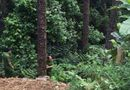 Tin tức - Xe máy lao xuống vực sâu gần 100m ở Tam Đảo, đôi nam nữ thương vong