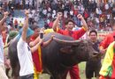 """Tin tức - Video: Trâu số 12 vô địch sau trận """"huyết chiến"""" tại lễ hội chọi trâu Đồ Sơn"""