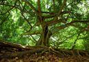 Tin thế giới - Người đàn ông mất tích 37 năm được tìm thấy nhờ cây mọc từ dạ dày