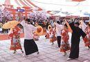 Cần biết - Ngày hội văn hóa Nhật Bản giữa lòng Phúc Yên hút du khách trong và ngoại tỉnh